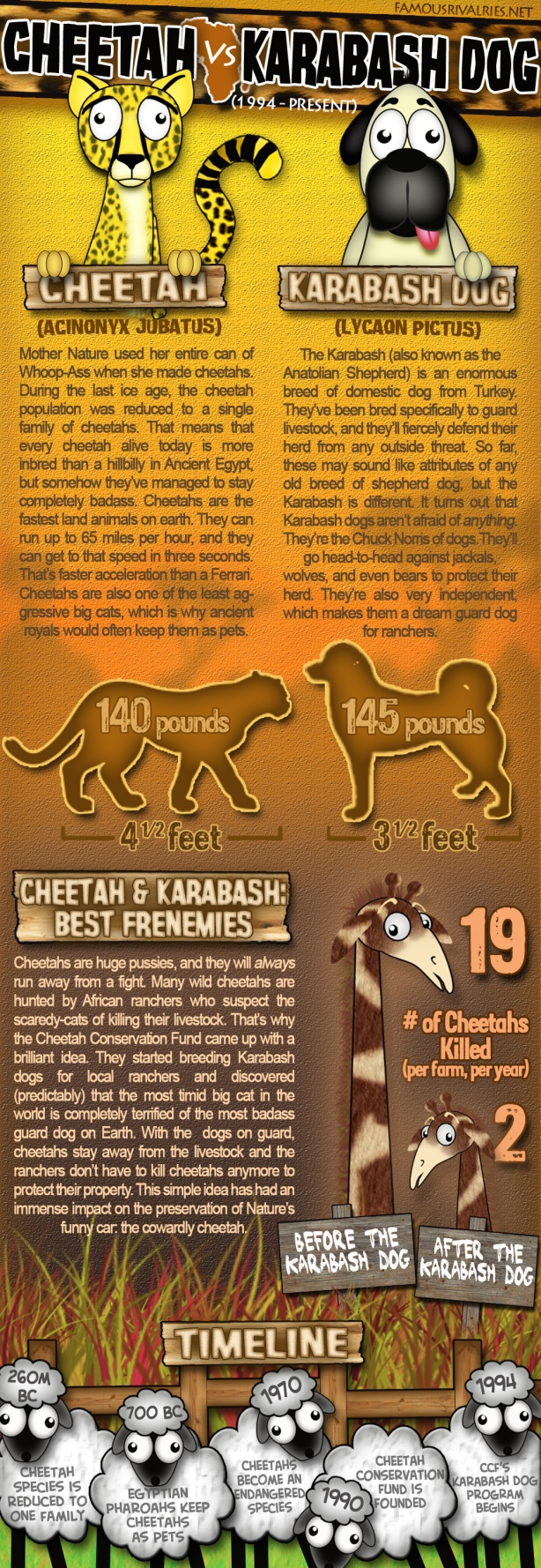 cheetah vs kangal dog famous rivalries africa animal